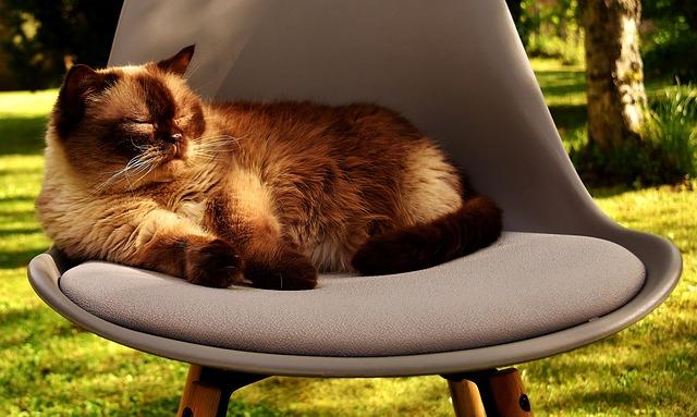 Kočka na stoličce